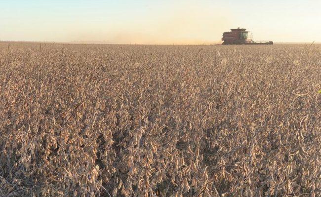 Cosecha de variedades de soja Asgrow